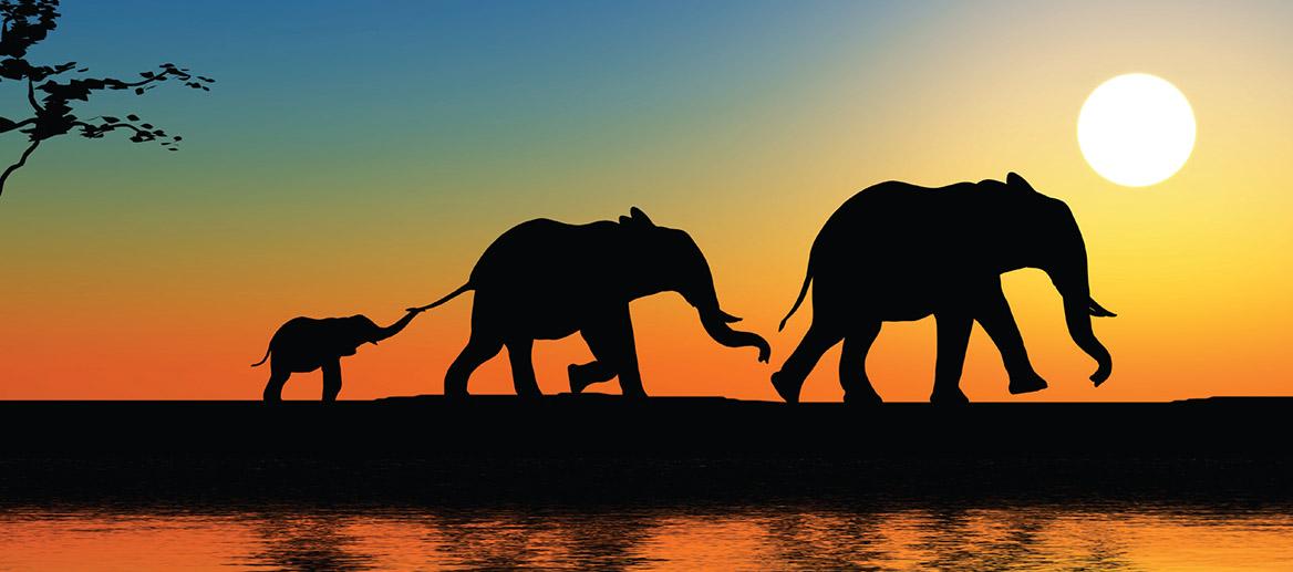 safariで自動再生の動画が再生しない場合の対処方法