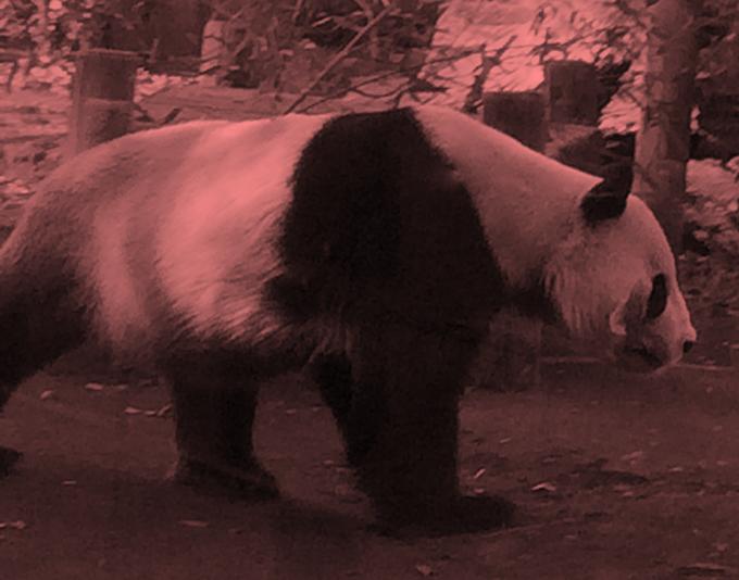 Pandasの使い方まとめ(機械学習の事前準備でよく使う機能)