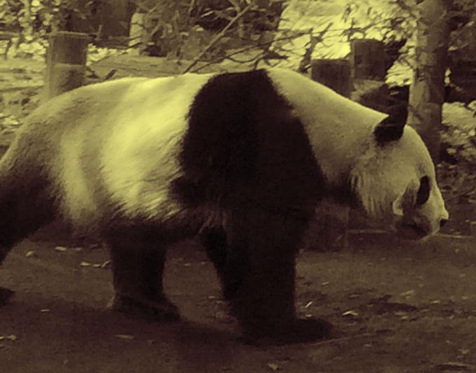 Pandasのカテゴリ型